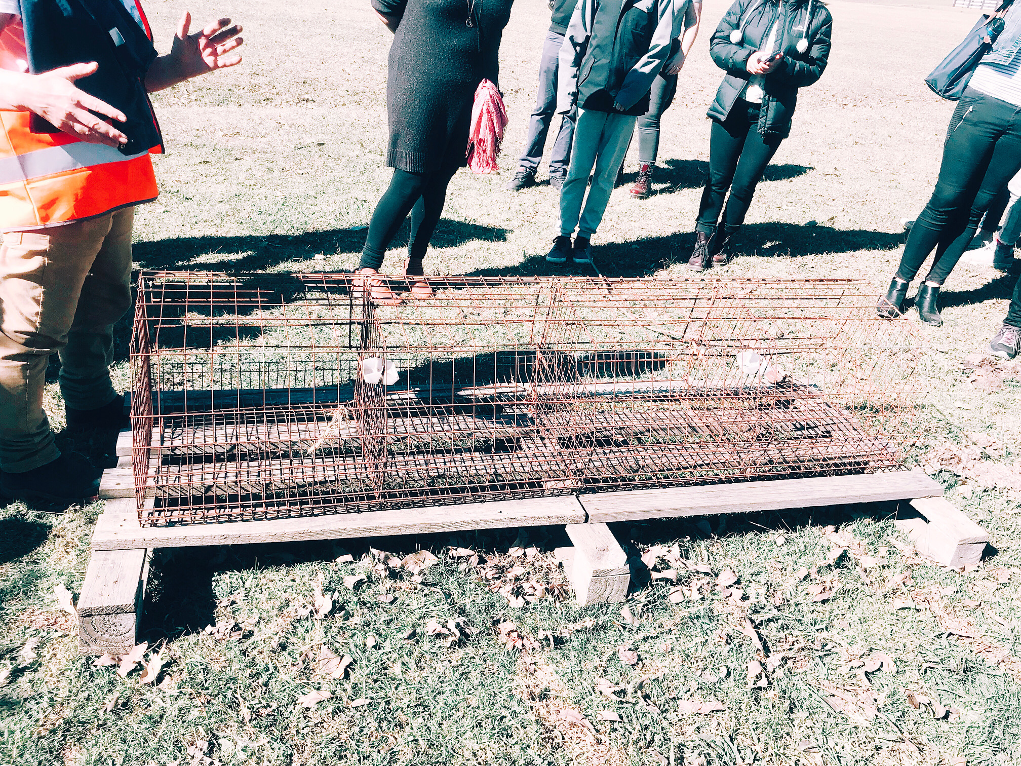 The tiny cages where the rescued hens spent their entire lives, cramped in with others, before rescue