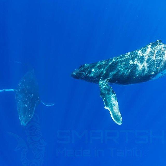 Humpback Whales in Tahiti  #smartshot #underwater #whale #tahiti #humpbackwhale