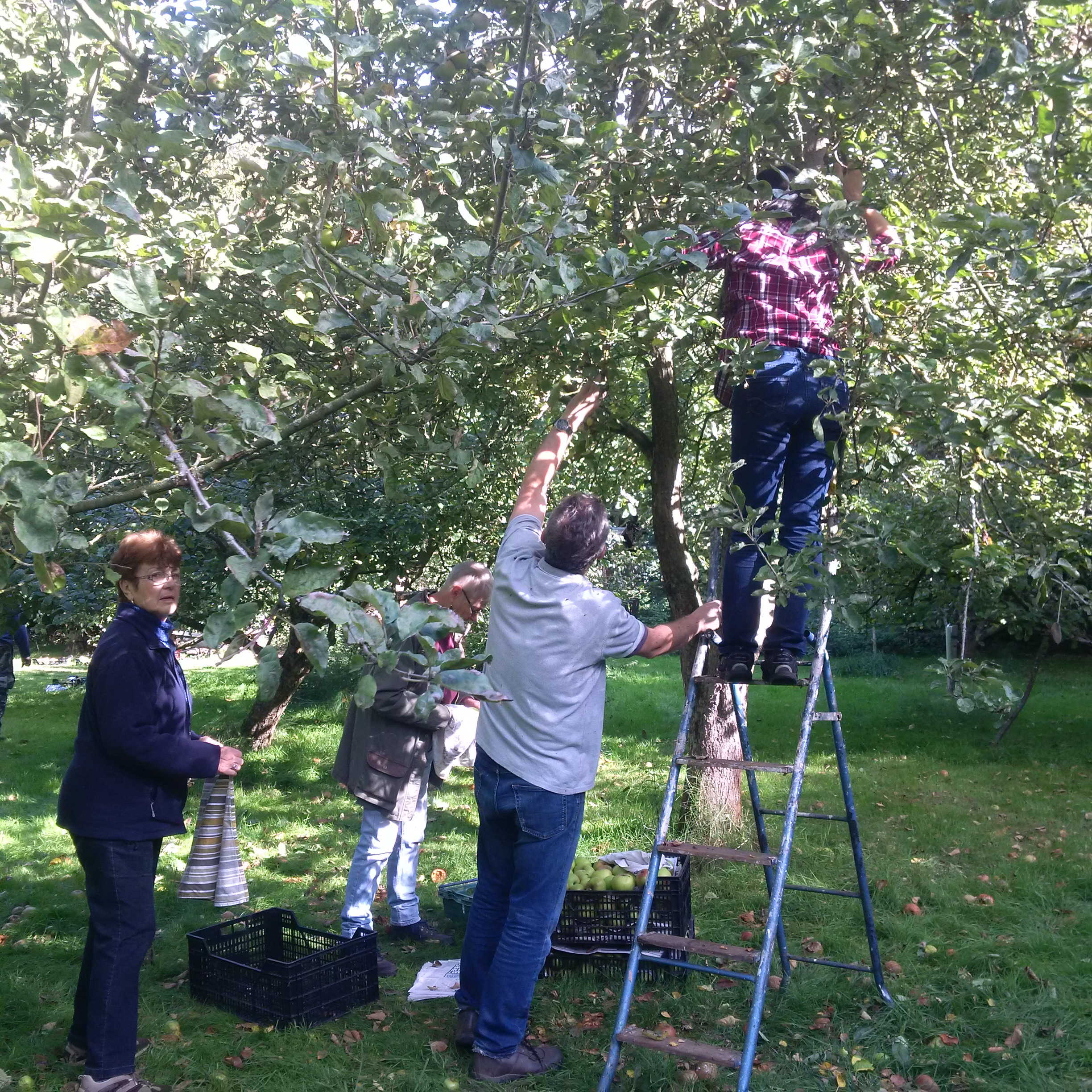 Apple picking second tree.jpg