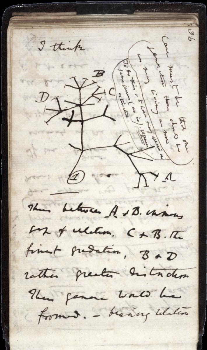 Darwin's tree of species, 1837