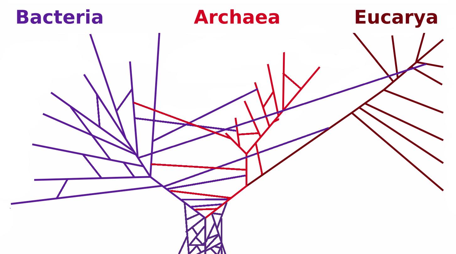 A modern tree of life, with horizontal gene transfer