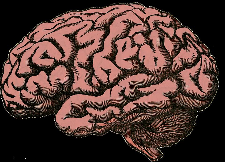 brain-512758_960_720.png