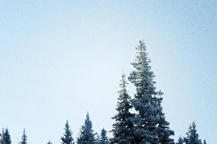 snow_trees_o-2-2.jpg