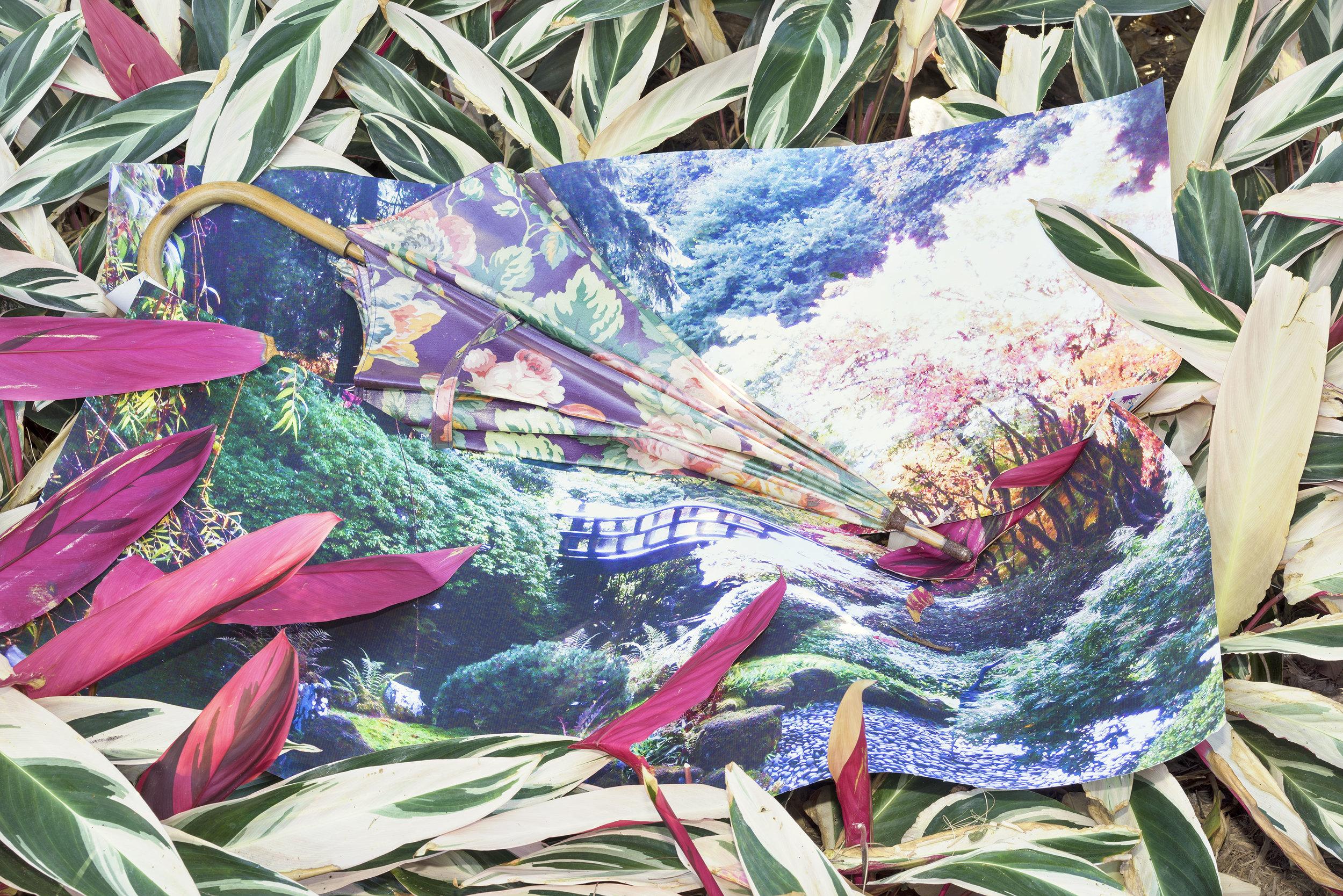 Untitled (Japanese Garden)