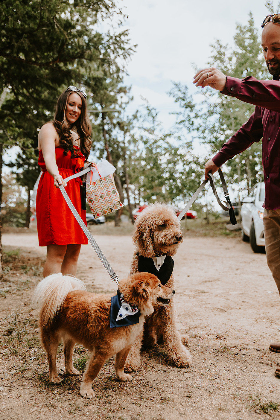 Wedding Dogs from Nederland, Colorado