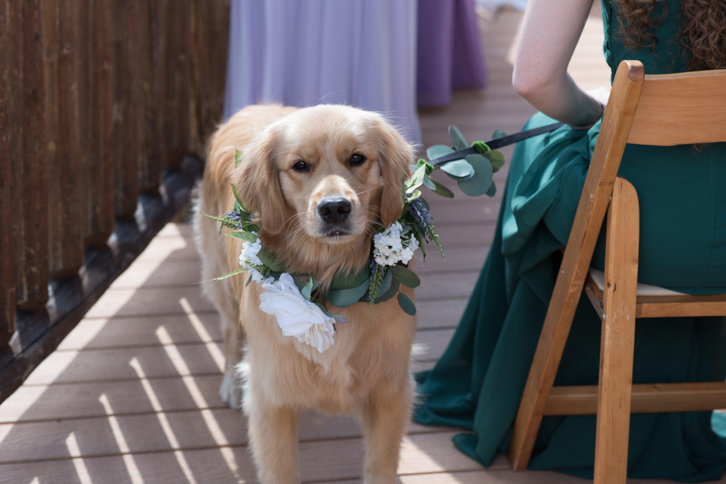 Wedding Dog with Flower Crown