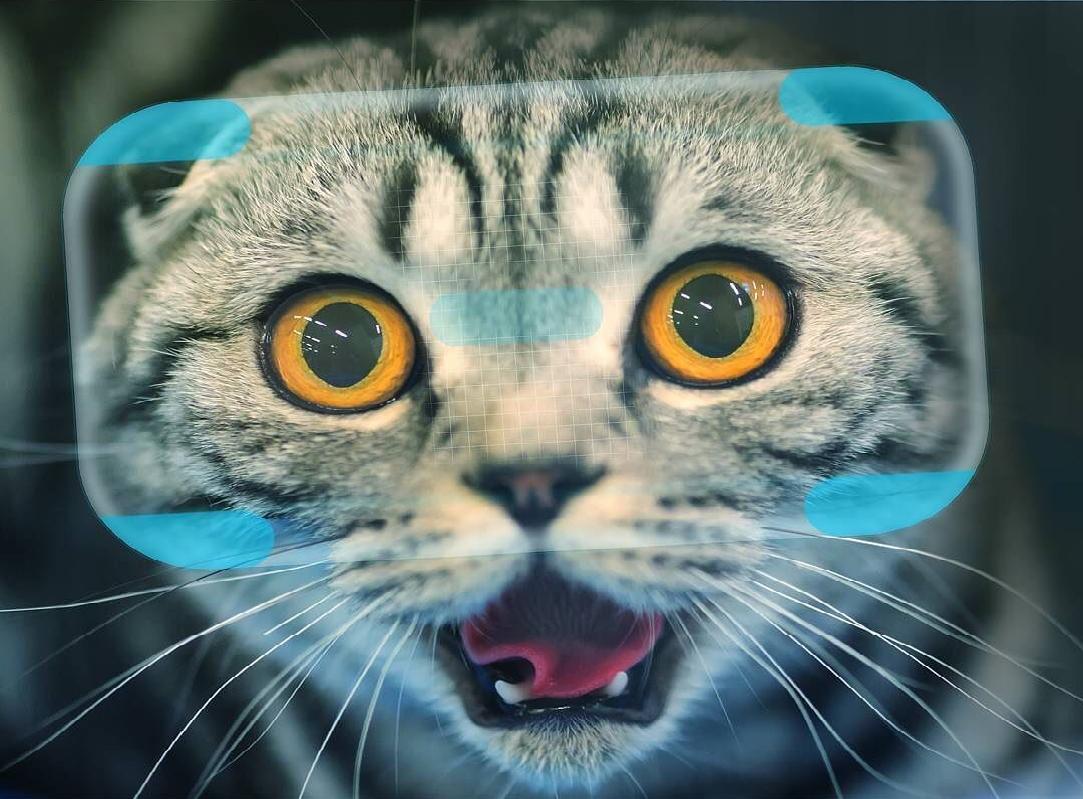 Catify VR