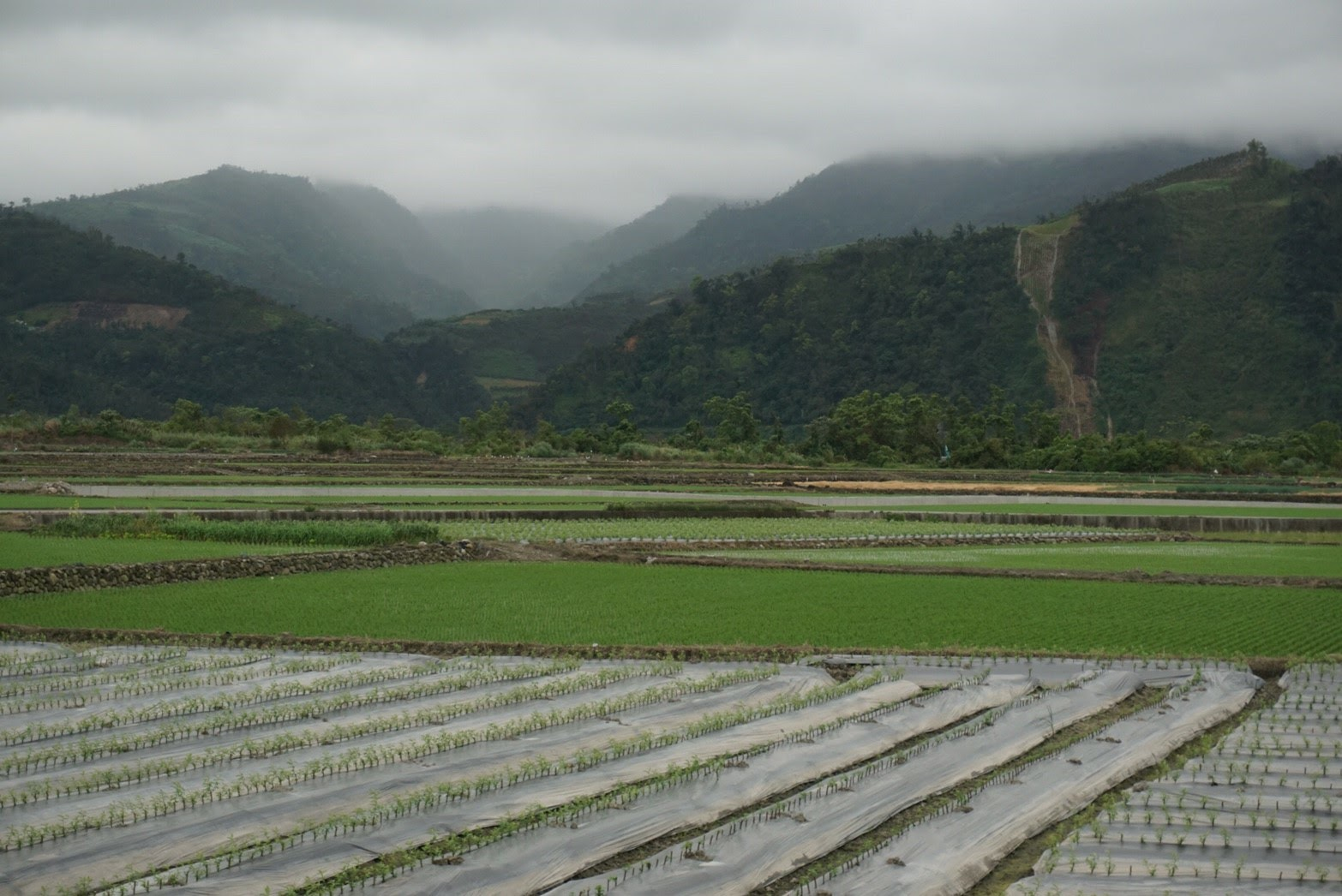Rice plots in rural Taiwan. Photo by Yu Hsuan Amy Yang.