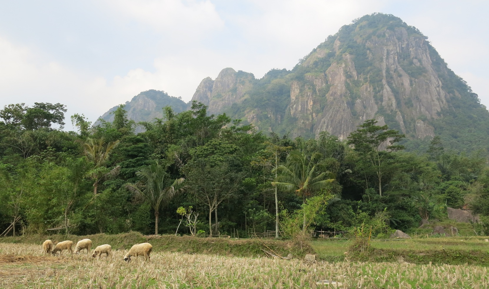 Farmland and mountains in Purwakarta, a rural area between Jakarta and Bandung, and were much of the tunnel excavation for the new HSR is taking place. Photo by  blue tooth 7.