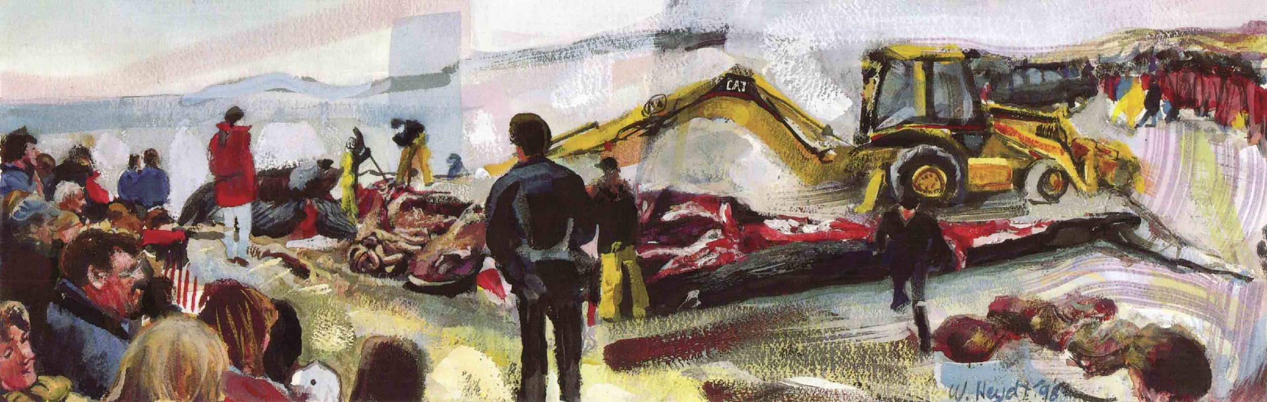 Blue whale on Second Beach, dissection with back-hoe, No. 4 - Middletown