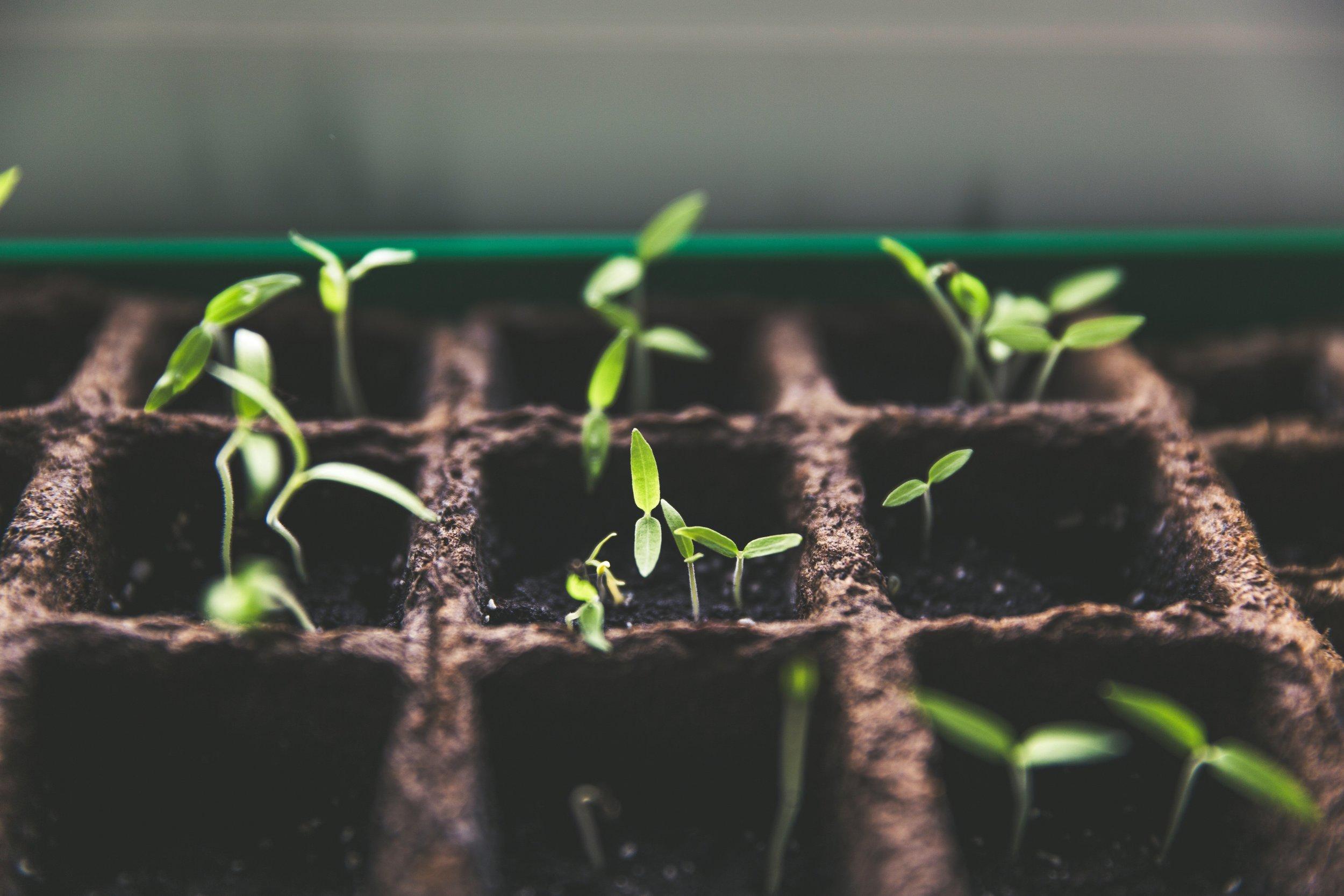 Foodtech et agritech : le numérique viendra-t-il au secours de nos assiettes ? -