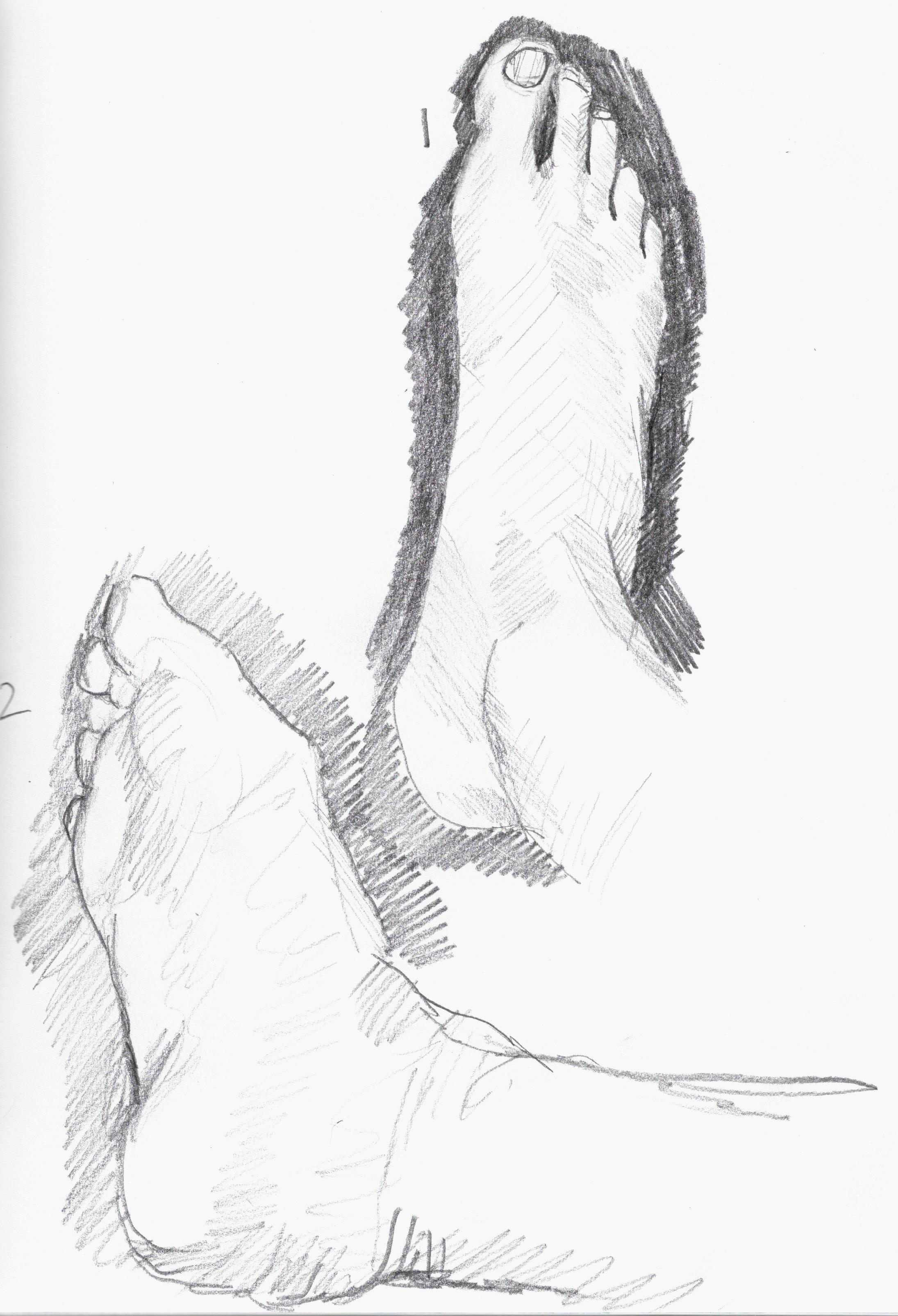 anatomy 19.jpeg