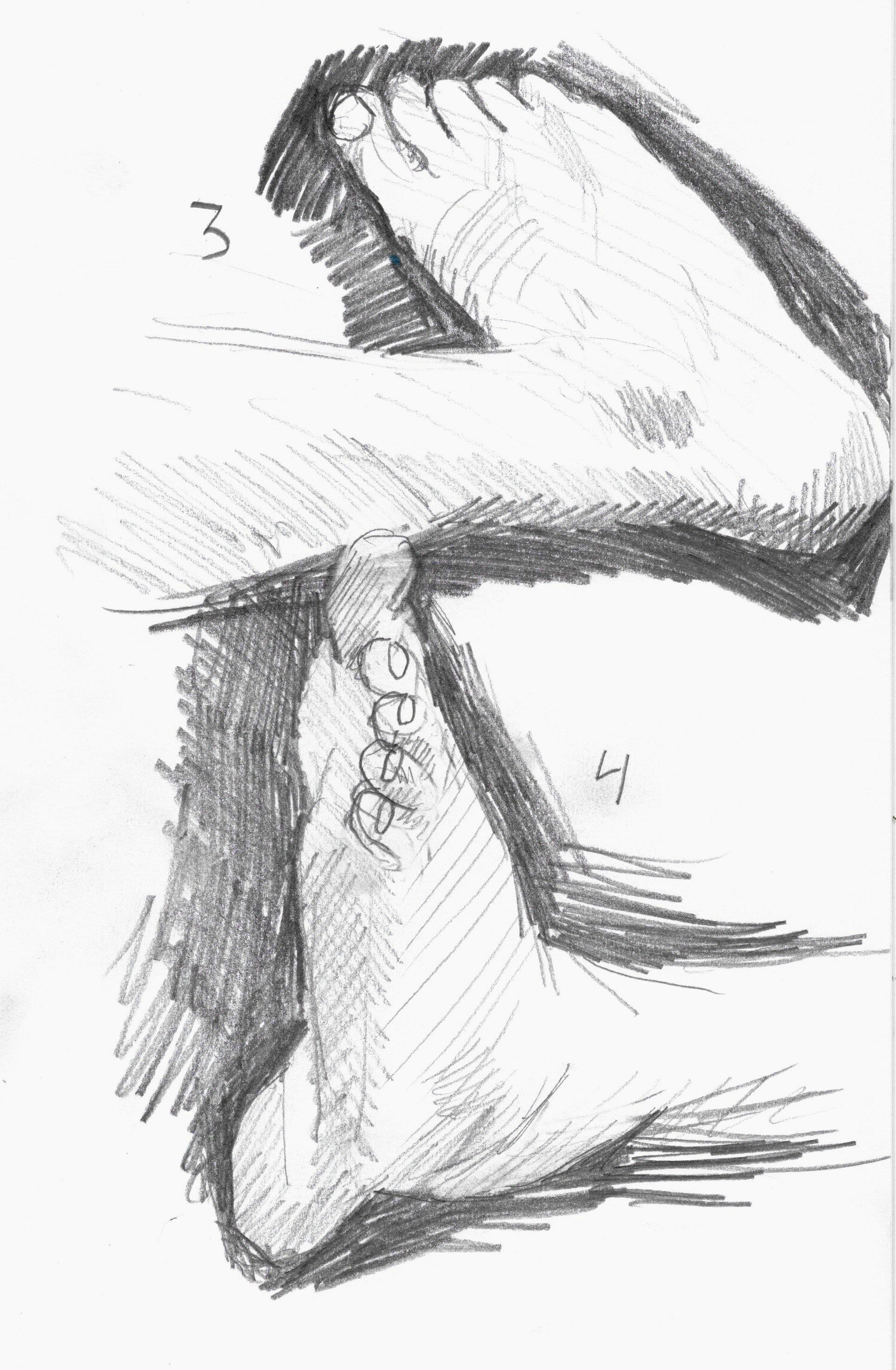 anatomy 20.jpeg