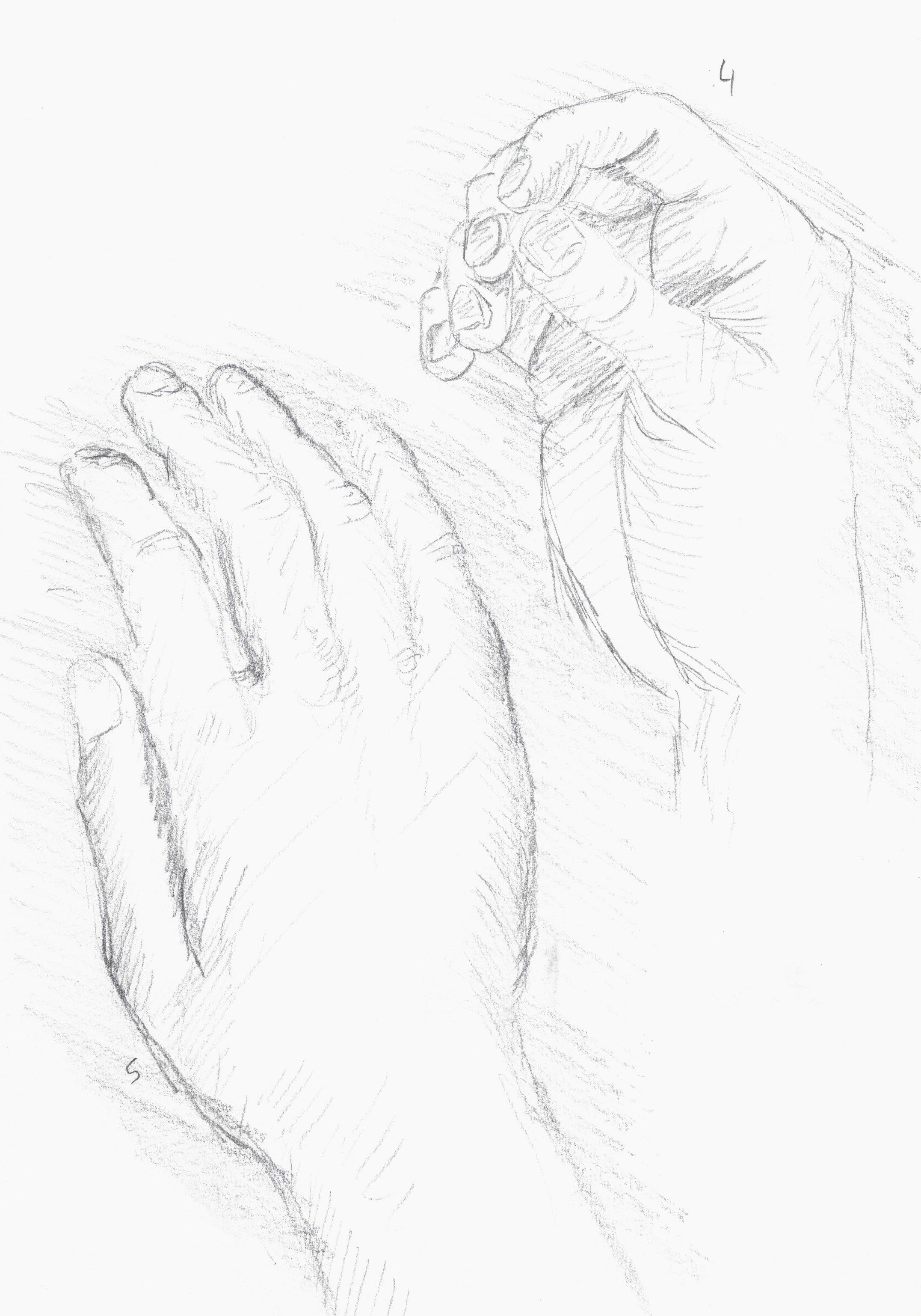 anatomy 2.jpeg