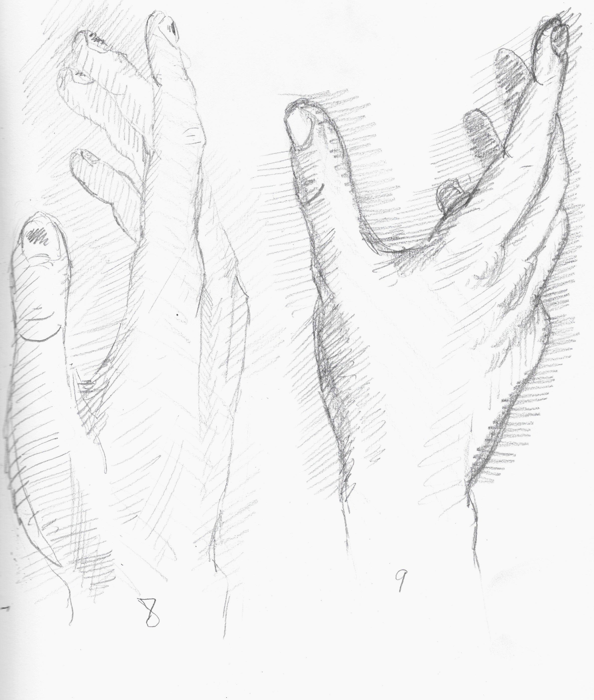 anatomy 4.jpeg