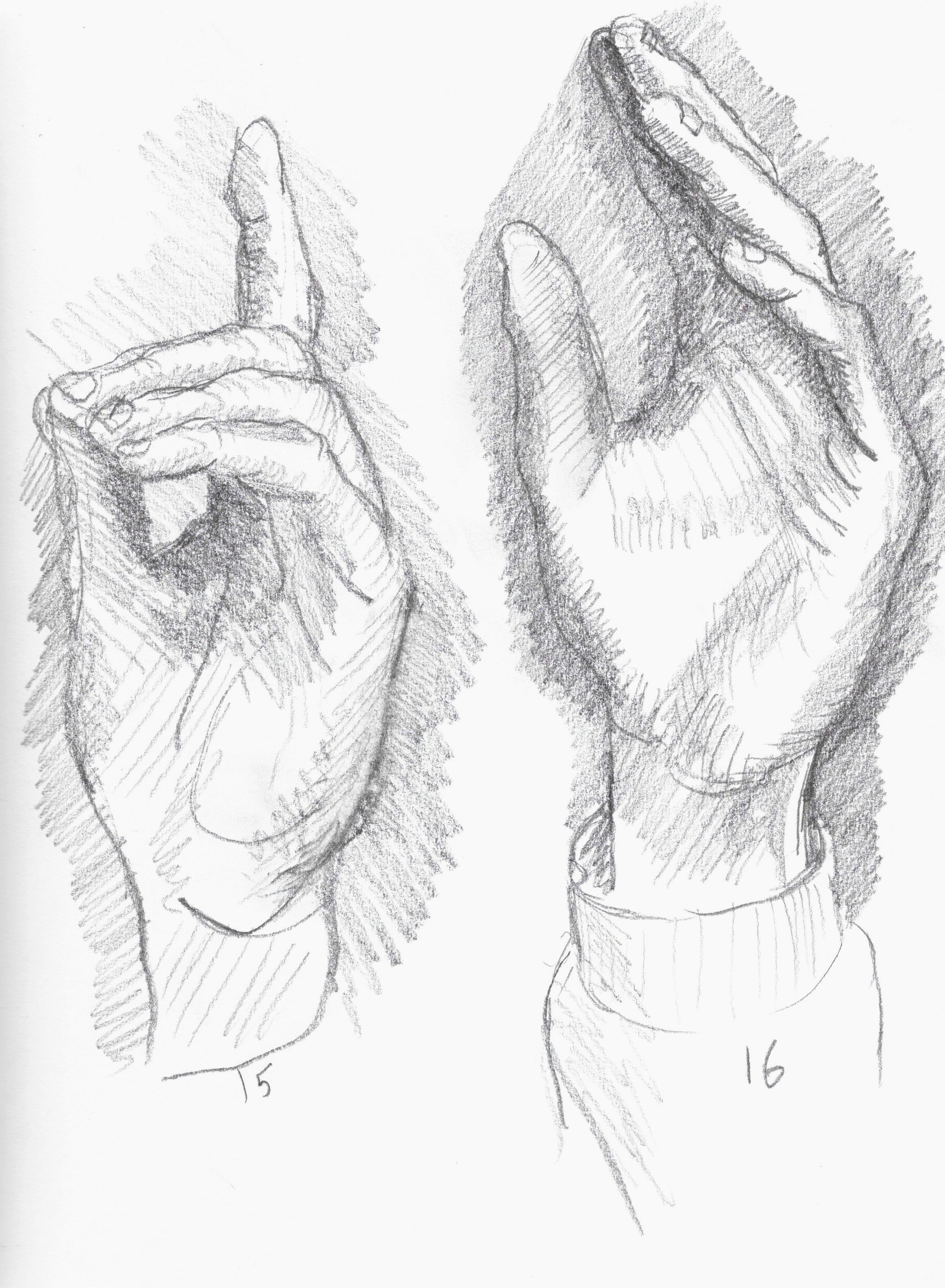 anatomy 12.jpeg