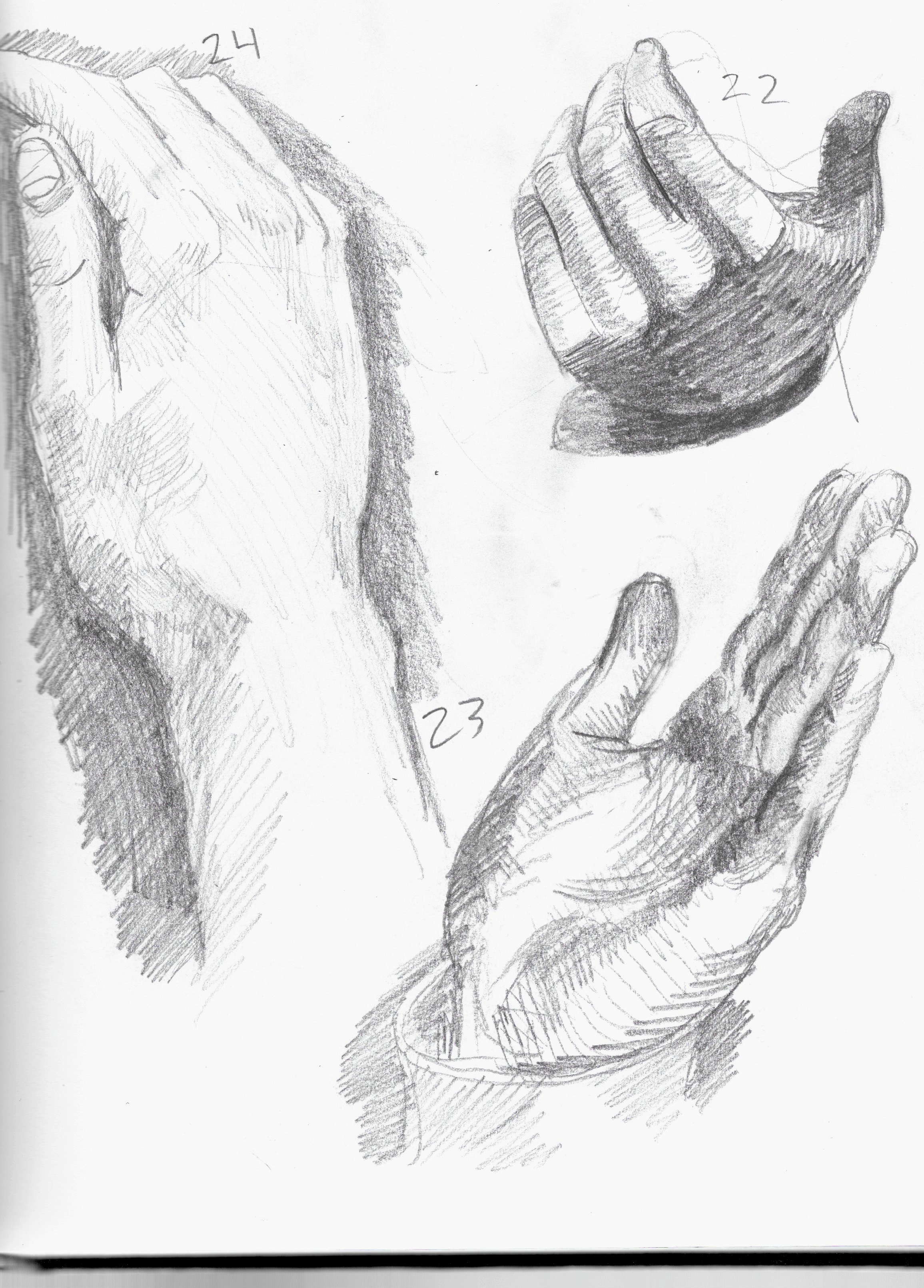anatomy 15.jpeg