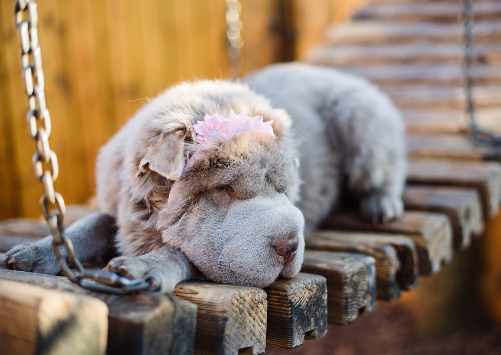 I'm not really napping. Just showing off my flowery headband.