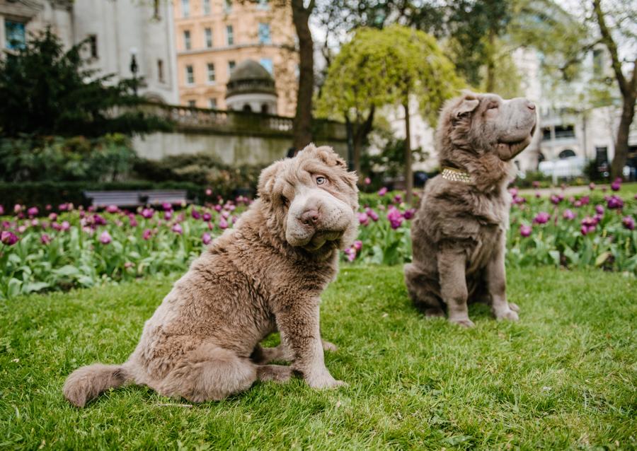 Dog Portraits London_01.jpg