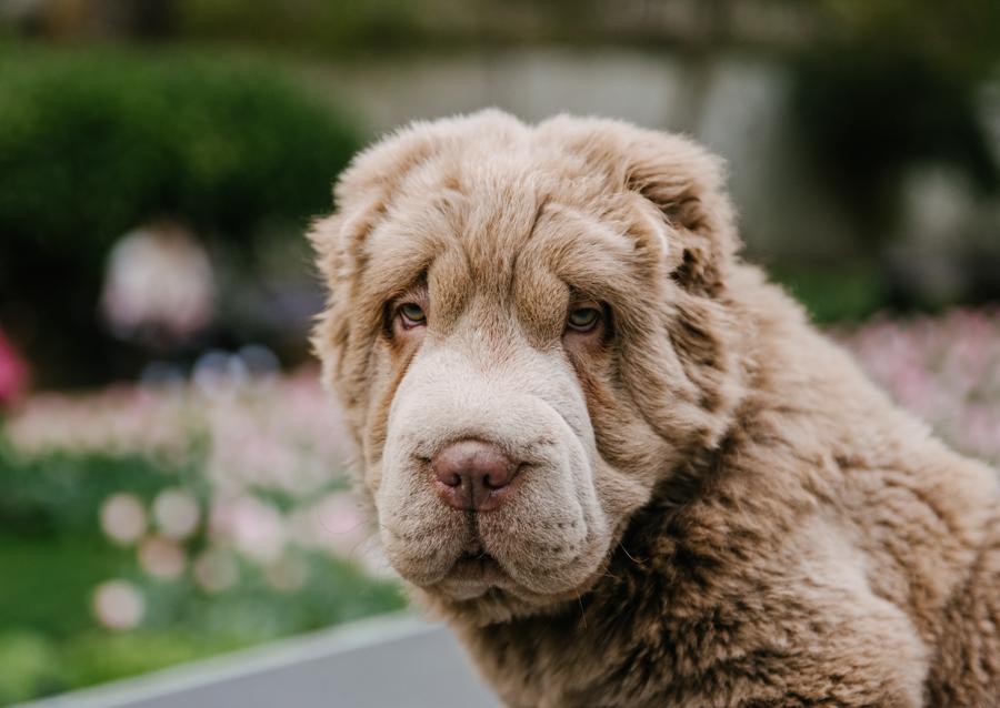 Dog Portraits London_03.jpg