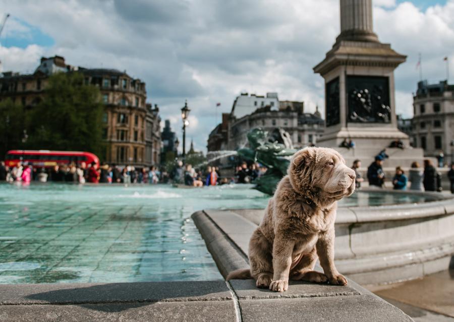 Dog Portraits London_04.jpg