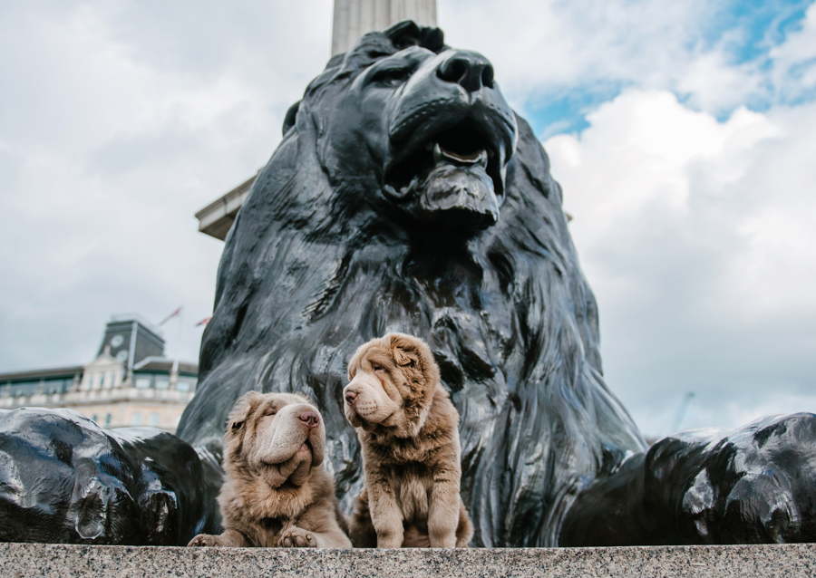 Dog Portraits London_05.jpg