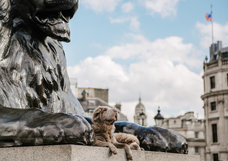 Dog Portraits London_06.jpg