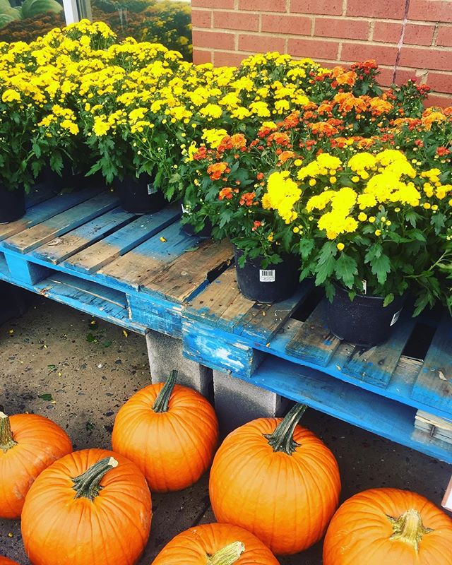 Autumn 🍂 is almost here! Pumpkins and mums 🌼are already out at @wholefoods here in the Kentlands. #onlykentlands #kentlands #thekentlands #wholefoodsmarket #wholefoods #pumpkins #fall #autumn #dcsuburbs #realestate #kimco