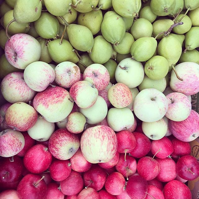 Orchard goodness! Apples and pears for days. #anthemhillsfamilyfarm #fallharvest