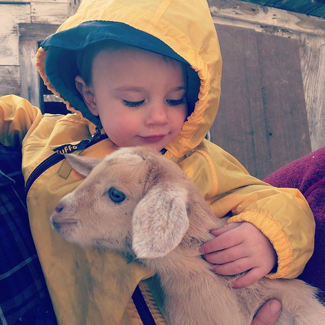 In spring you cuddle all the babies. Thanks Auntie SuJan for having us over for goat snuggles. #babygoats #happyspring #livingmybestlife #mudsuitsme