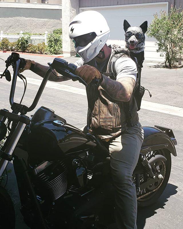 My daddy ✔ My goggles ✔ terrorizing the neighborhood on Sunday ✔✔ #motopup #heelergram #puppiesofinstagram #motorcycle #rideordie #dogsofinstagram