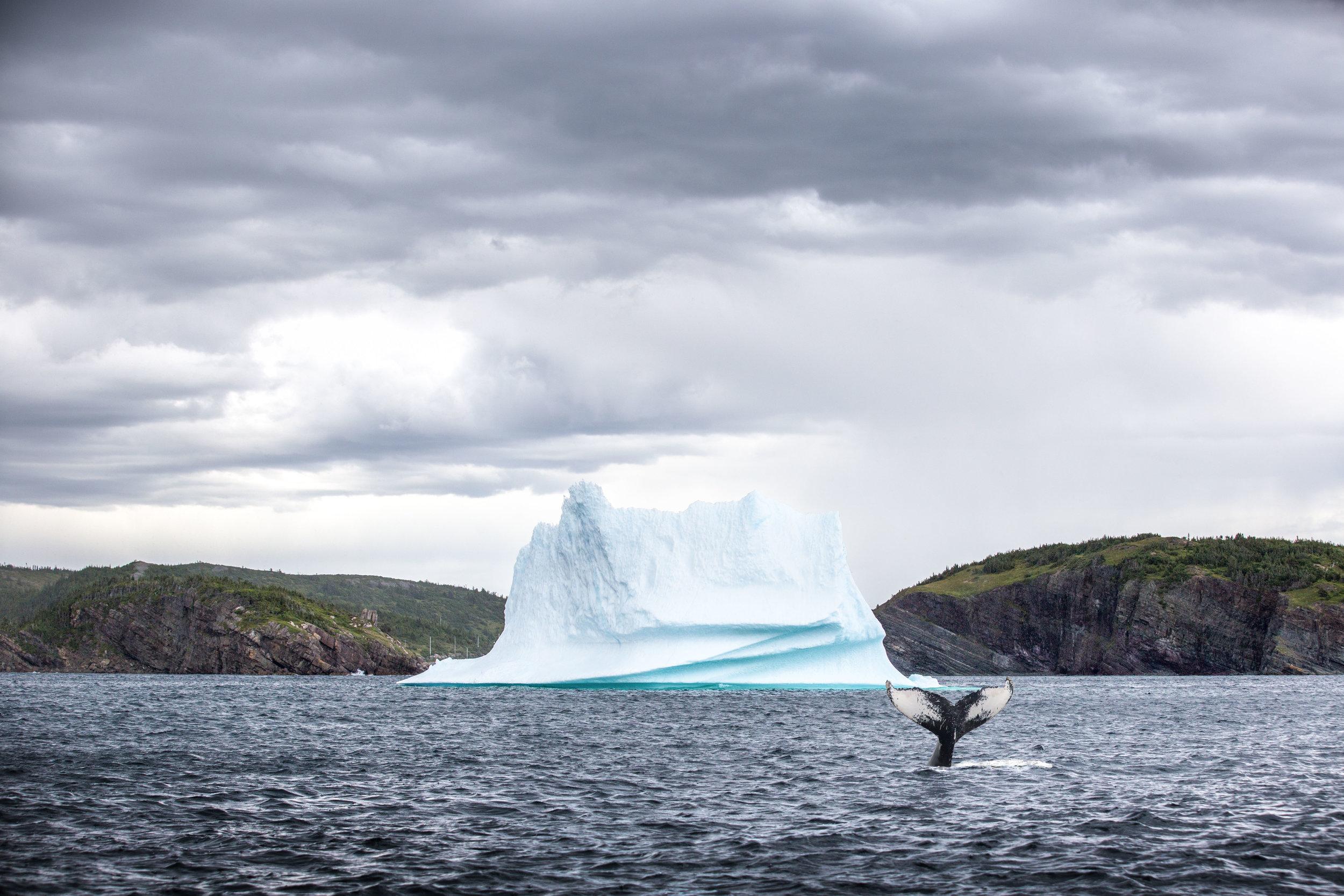 whale ice.jpg