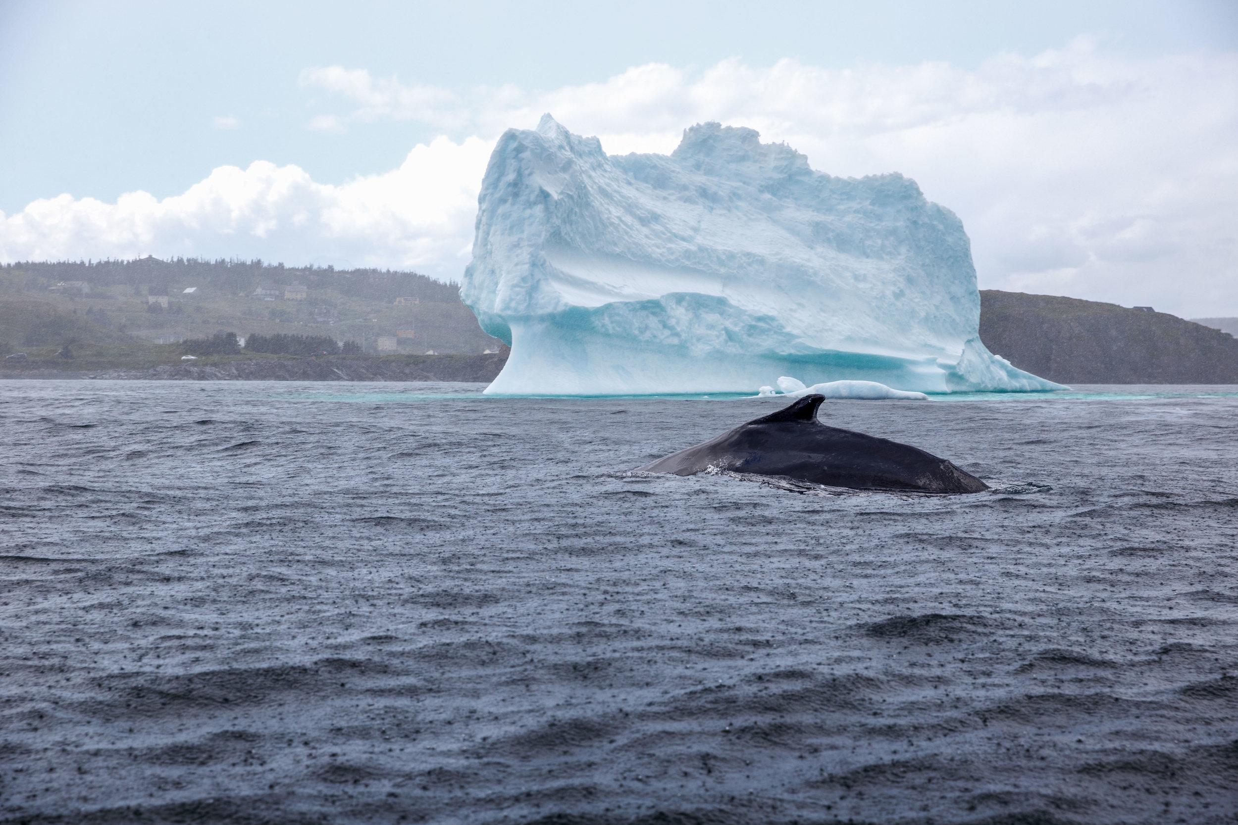 Iceberg Entertainment