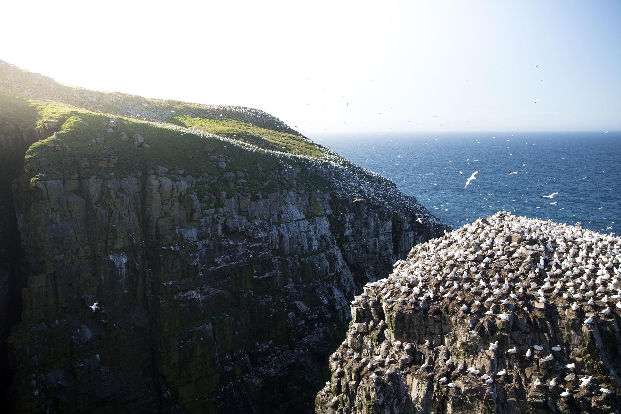 'Bird Rock'