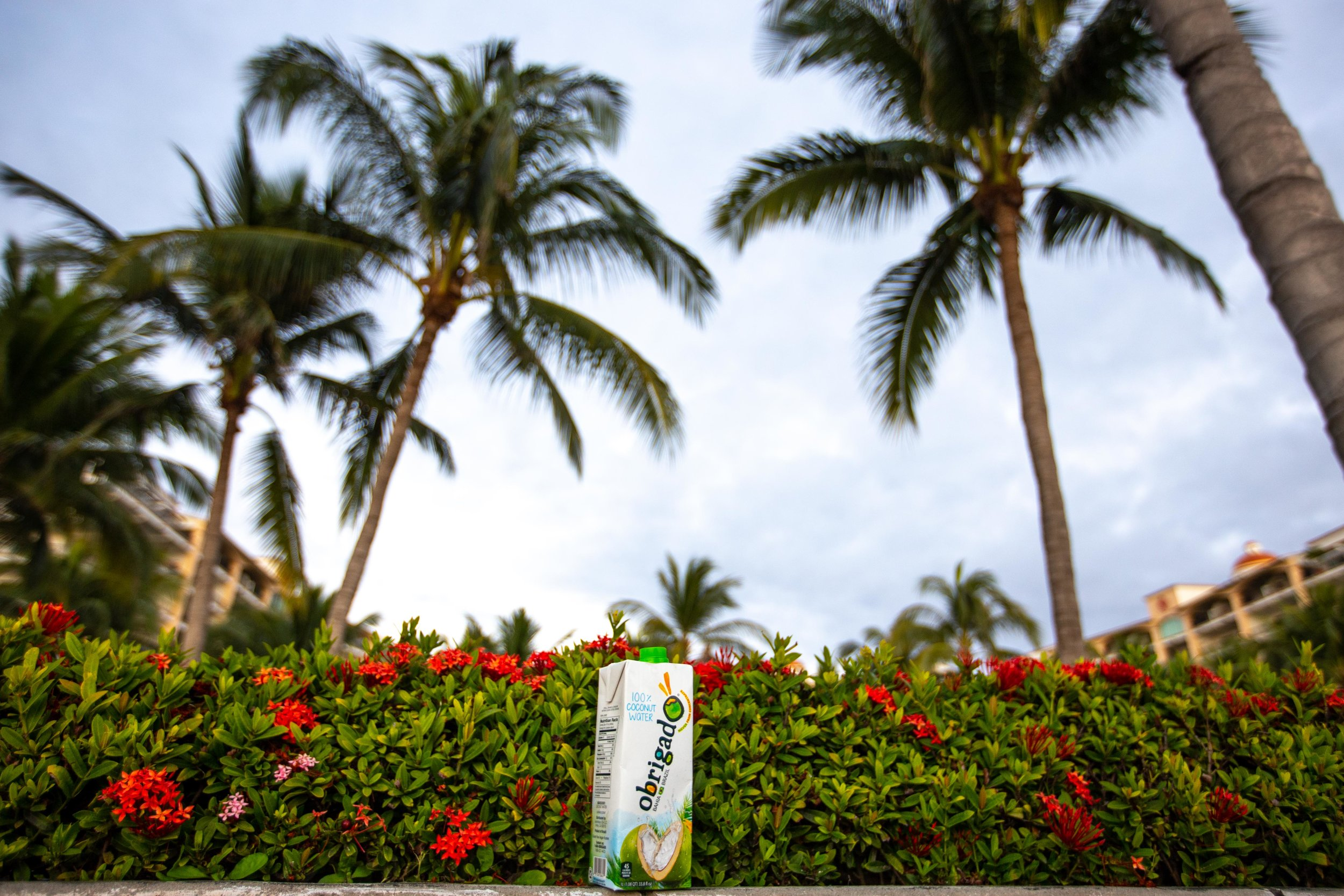 In partnership with Obrigado Coconut Water. All views and opinions are my own.