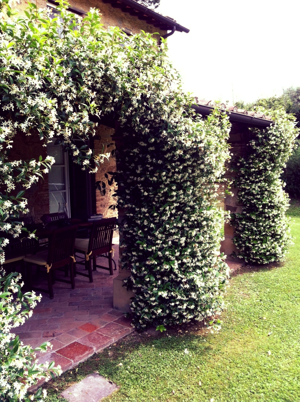 Jasmine blooms on the portico just outside the kitchen facing west. The smell is amazing!