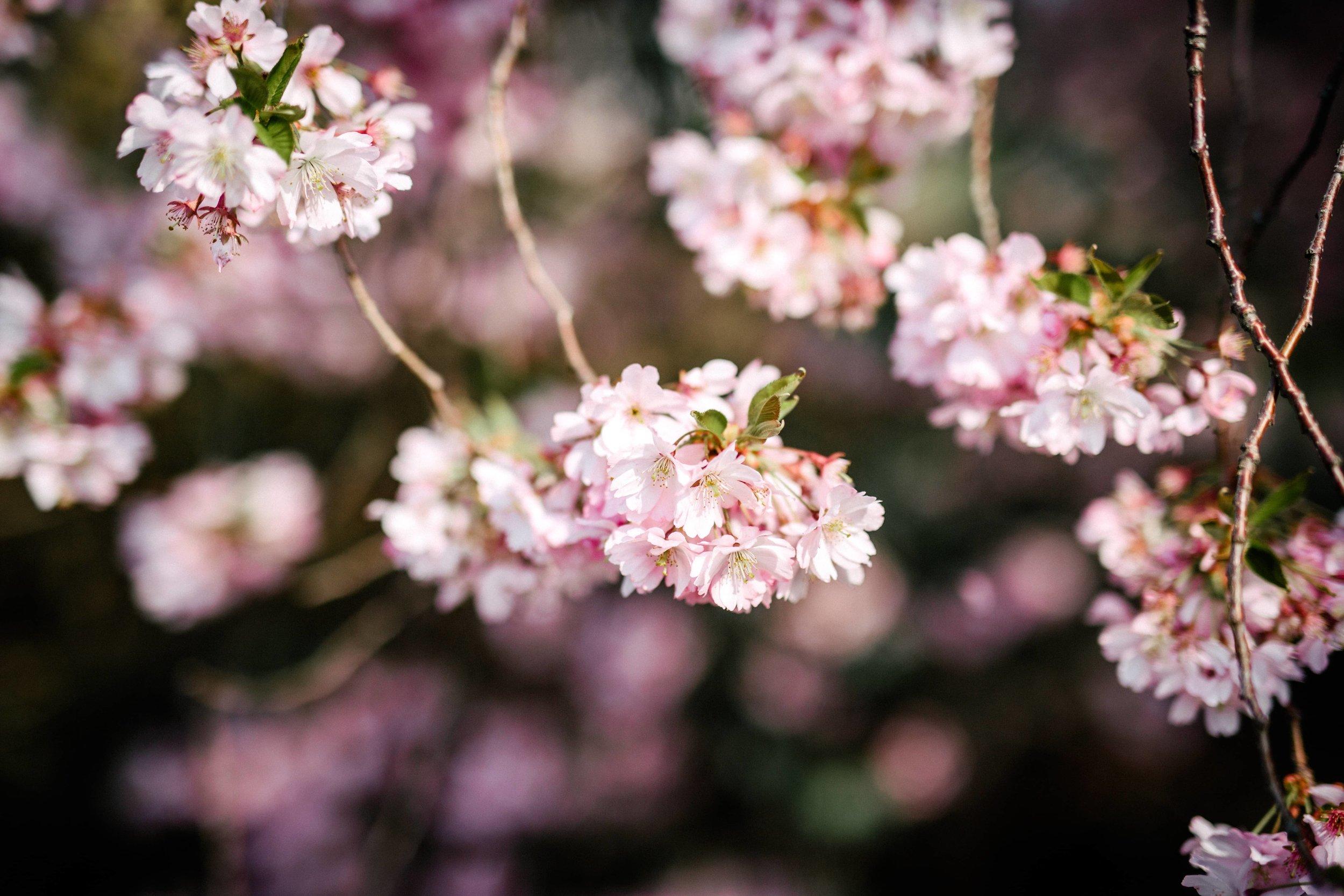 Frühling-19.jpg