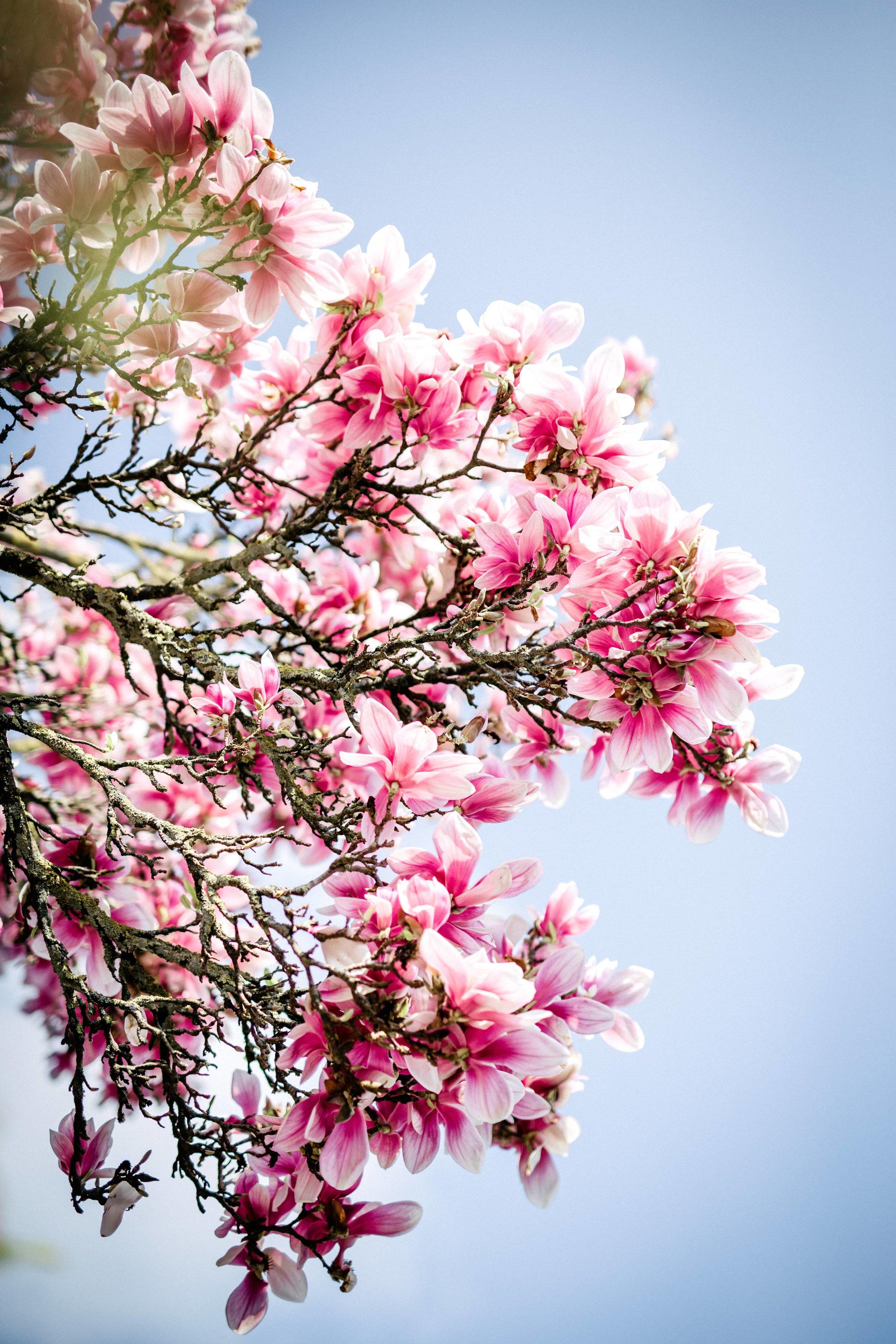 Frühling-30.jpg