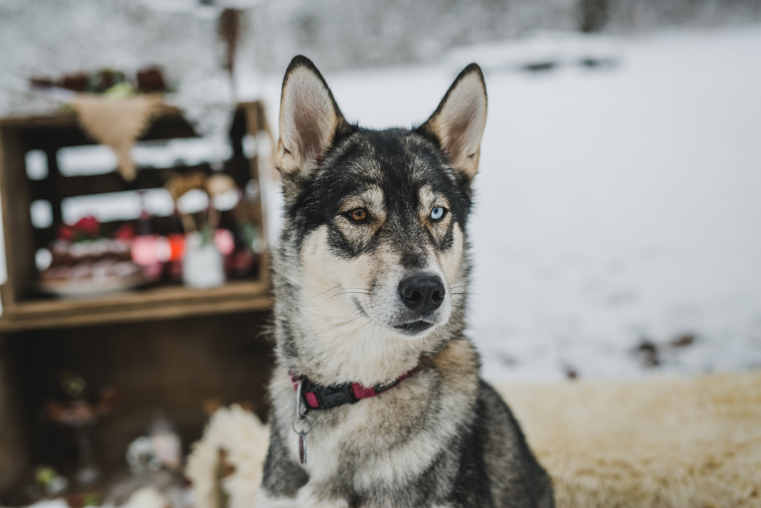 yessica-baur-fotografie-styleshooting-huskies-8088.JPG