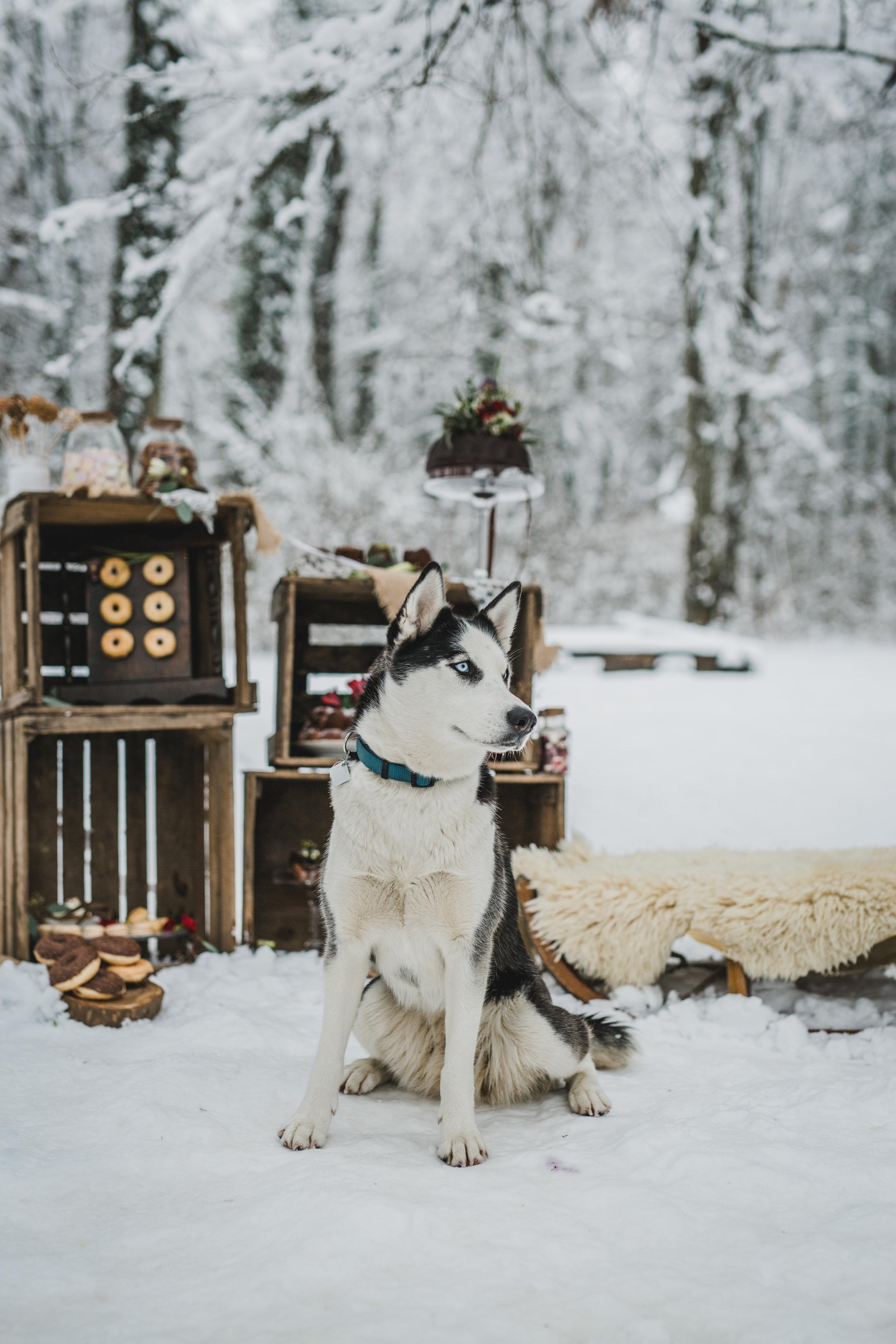yessica-baur-fotografie-styleshooting-huskies-8155.JPG