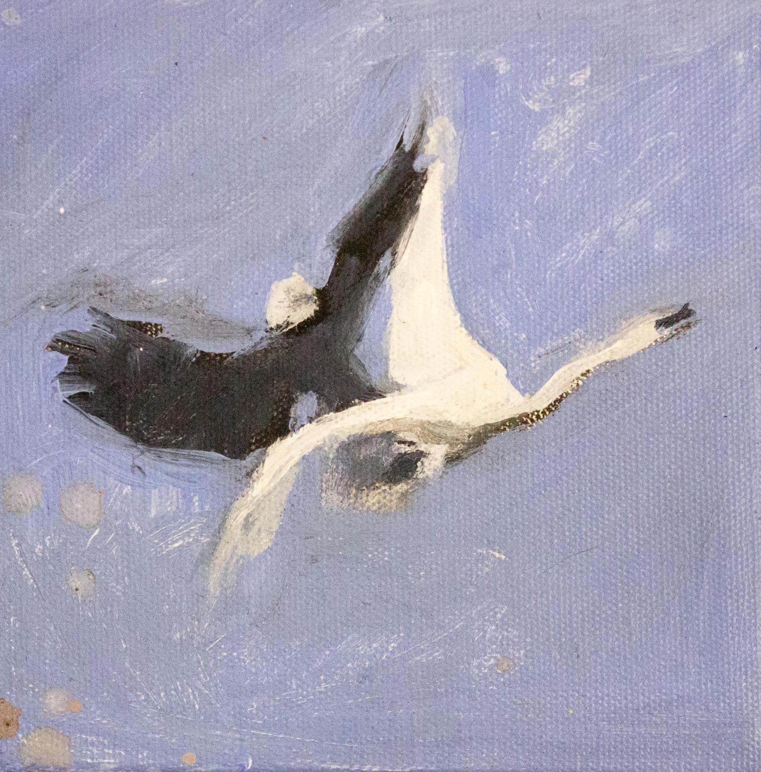 Eagle vs Swan