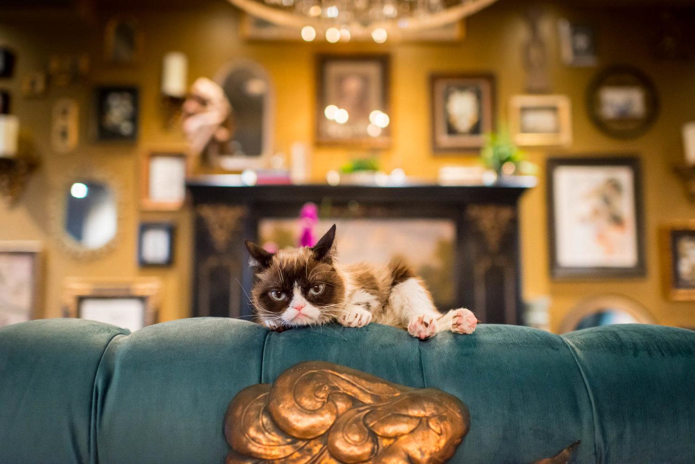 grumpy-cat7.jpg