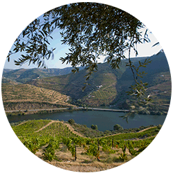 Photo of the Douro Valley from the IVDP web site