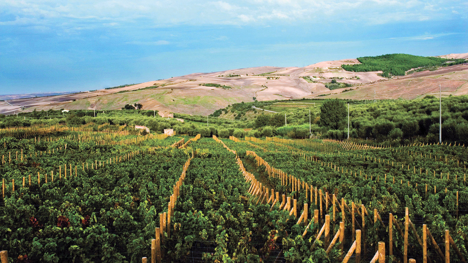 Despite southern Italy having many economically improverished parts of the country, places like Basilicata are capable of producing wines fit for kings and queens. Image credit:  Wine Spectator