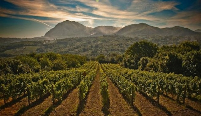 The rustic setting of Campania has given us the red grape Aglianico in a previous post, but today we explore one of the region's top white grapes.