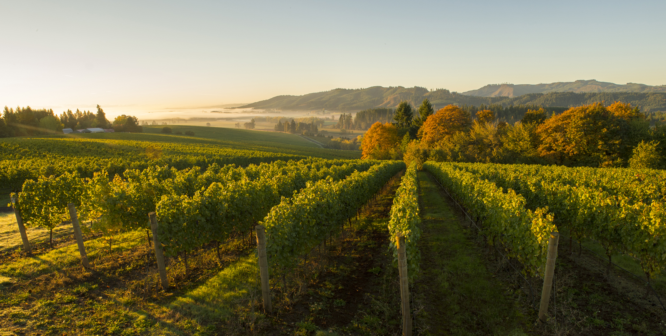 With easy access to Portland, Oregon's Willamette Valley is home to serious Pinot Noir...which you should be drinking.