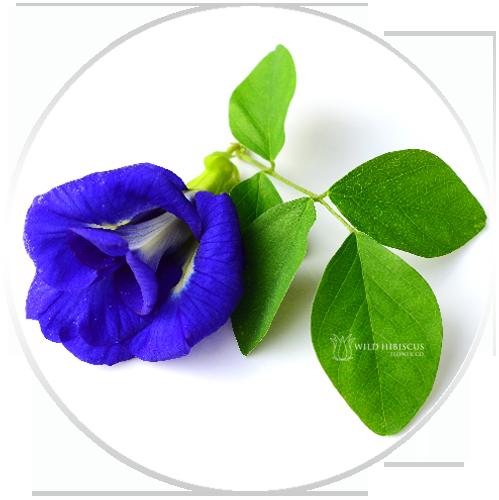 Image credit:  Wild Hibiscus Flower Company