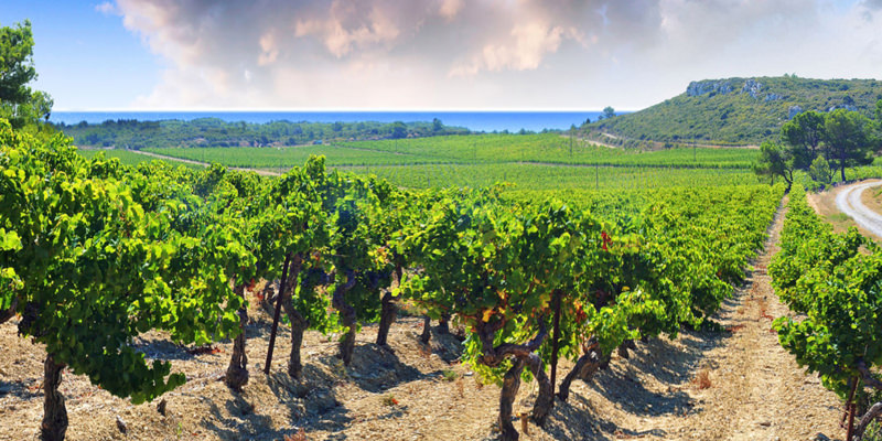These vineyards set near the beautiful blue Mediterranean Sea are giving you an easy-drinking wine that you might be missing out on. (Image credit:  VinePair )
