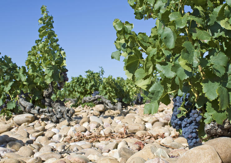 We won't have anything quite so Chateauneuf-du-Pape-level majestic in the backyard, but we can do our best to replicate it. Image credit:  Viator