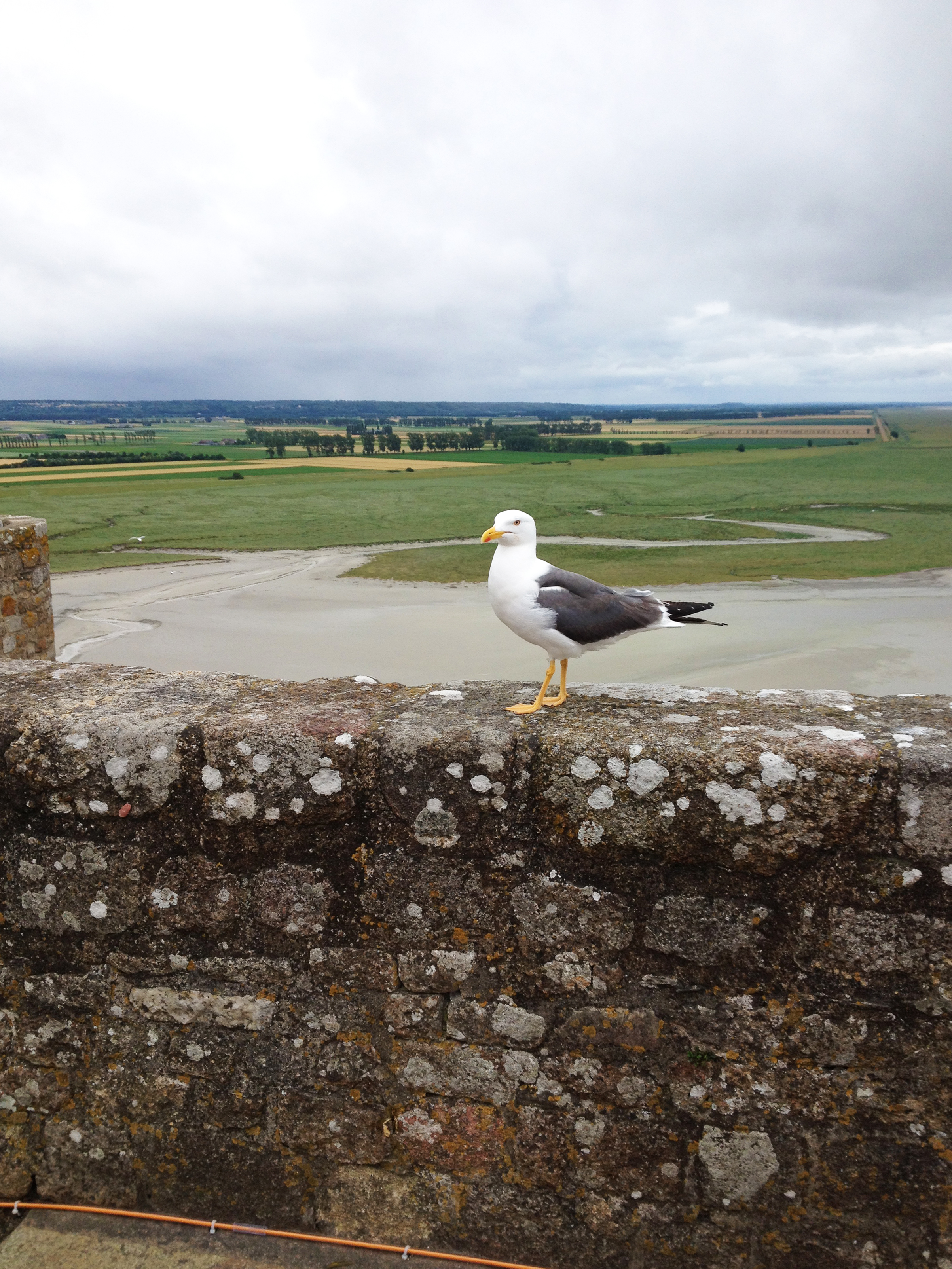 We weren't allowed to take many photos inside of the abbey of Mont Saint-Michel, but back outside I snapped a pic of a new friend we made.